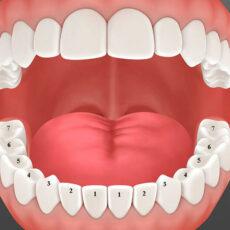 Bạn đã biết người trưởng thành có bao nhiêu cái răng?